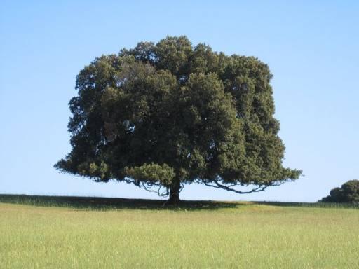 Вот такие бывают деревья