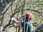 Удаление веток на дереве