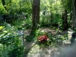тополь на кладбище частями