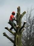Работа на дереве: услуги по спиливанию